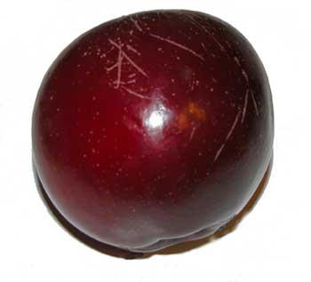 Plum-red