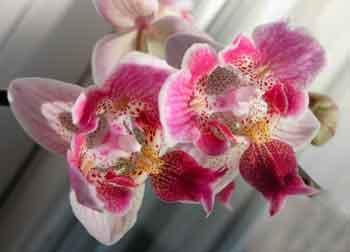 Flowerchildcarmela