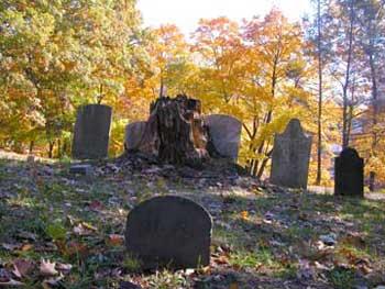 Treetrunkwstones